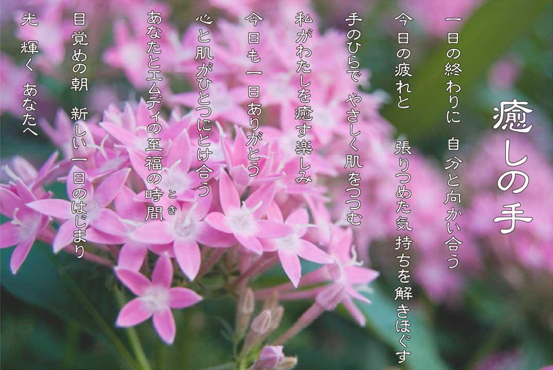 癒しの手 6月 ペンタスの花言葉は「願いが叶う」